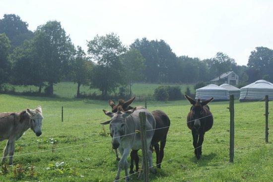 La Ferme des Anes : les ânes