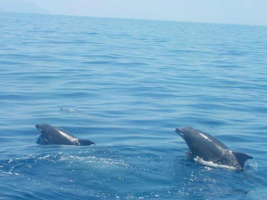 Excursiones de avistamiento de ballenas Flipper Uno: dolphins