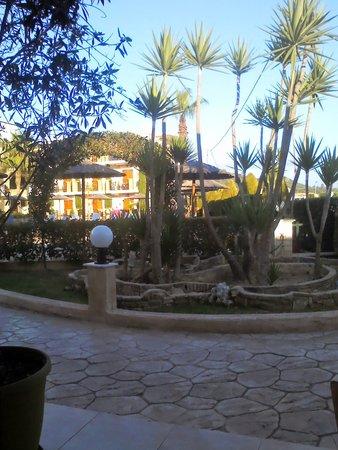 Plaza Pallas Hotel: The tortoises