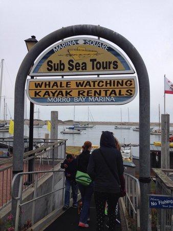 Sub Sea Tours and Kayaks: L'entrata