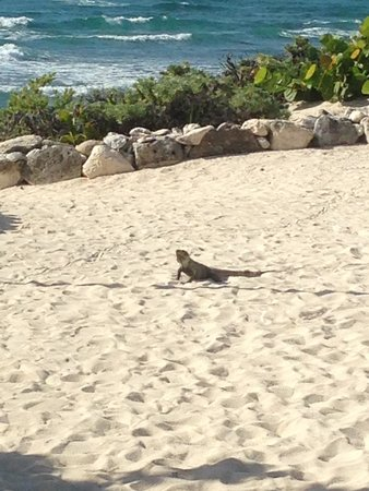 Grand Bahia Principe Tulum : LOCAL WILDLIFE