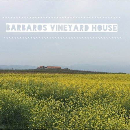 Barbare Vineyards