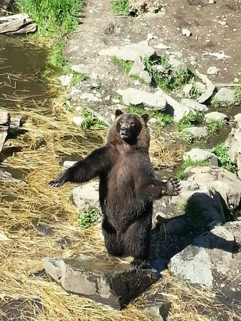 Fortress of the Bear : Toby using her sign language skills to get more food