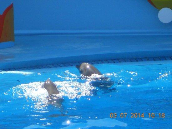 Zoomarine Algarve : Dolphin show