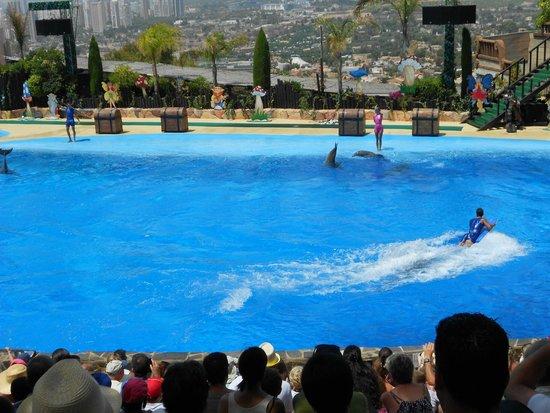 Mundomar : Dolphinarium