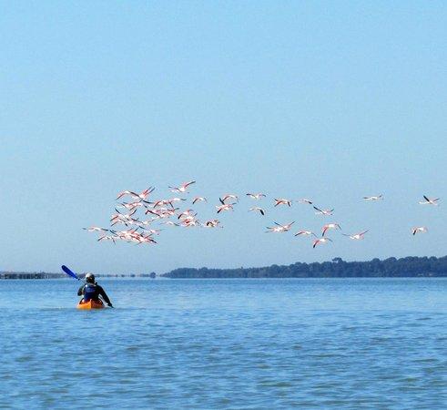 Palavas Kayak de Mer
