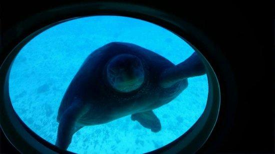 Atlantis Submarines Waikiki: Dude!
