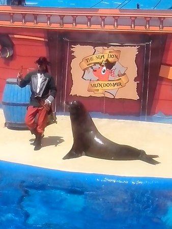Mundomar : Sea lion show