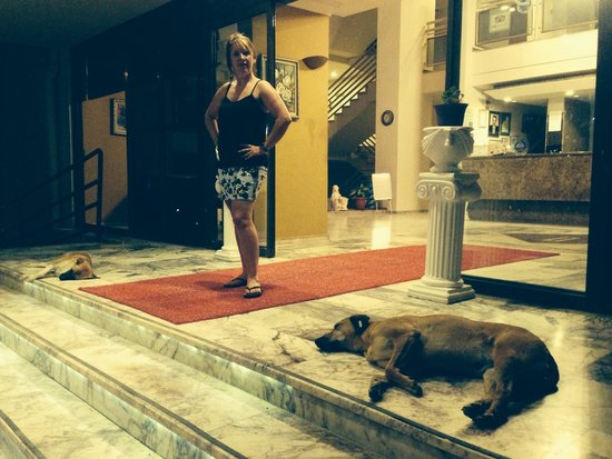 Tuntas Beach Hotel Altinkum: Dogs taking a swim next to you with flees etc