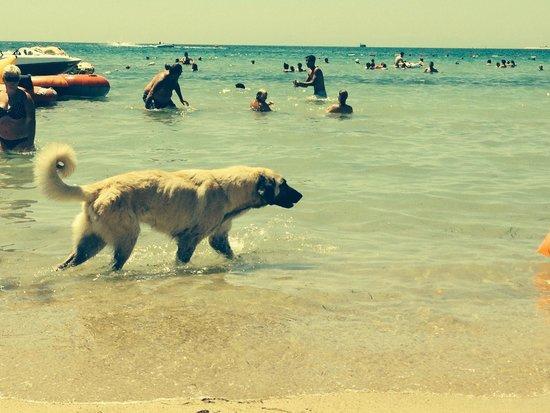 Tuntas Beach Hotel Altinkum: Taking a swim