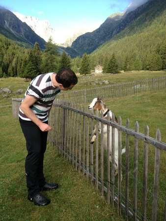 Relais d'Arpette: The goats are an attraction for children