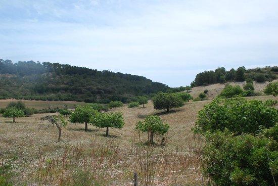 Son Josep De Baix : Surroundings