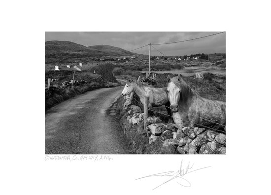 Giles norman photography gallery photo of connemara horses