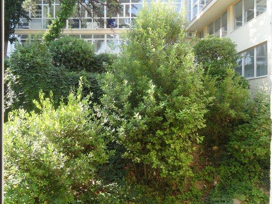 Hotel Cavtat: Garden View