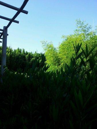 Bambous picture of les jardins aquatiques saint didier - Les jardins aquatiques saint didier sur chalaronne ...