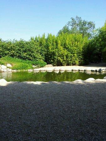 Le bassin photo de les jardins aquatiques saint didier - Les jardins aquatiques saint didier sur chalaronne ...