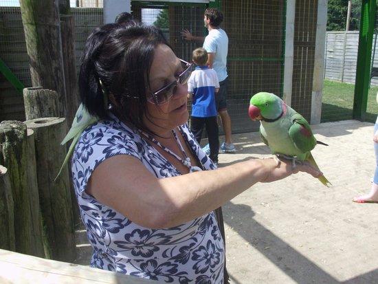 Lincolnshire Wildlife Park: Good lookin` bird (which one?)