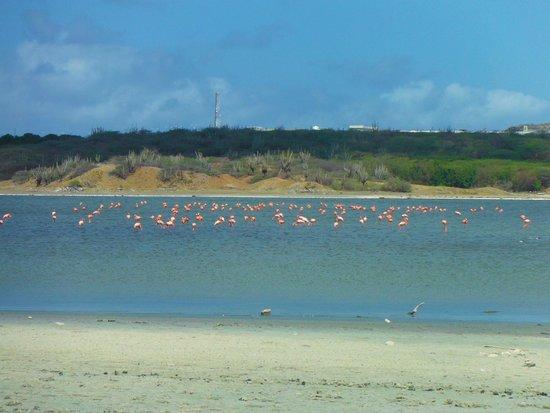 WannaBike : Flamingo's Jan Thiel