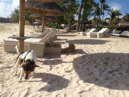 Ambre Resort & Spa: Los maravillosos perros del hotel