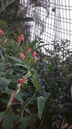 Bannerghatta National Park : buttefly garden
