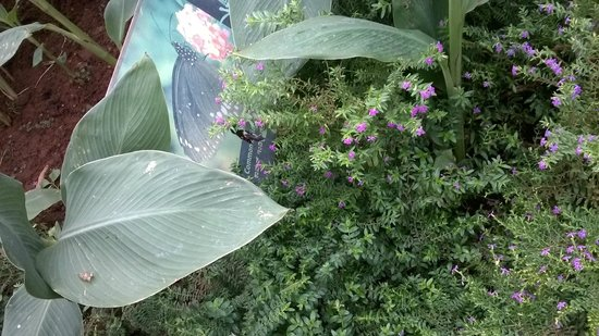 Bannerghatta National Park : butterfly garden