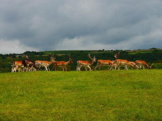 Margam Park: Deer herd