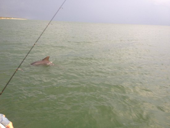 Southern Viking Charters: Dolphin Time