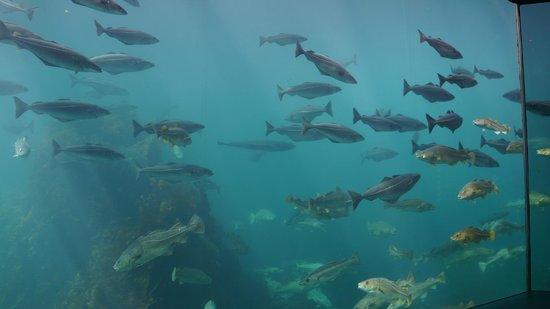Atlantic Sea Park: Fiskarna