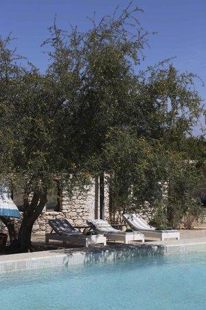 Les Jardins De Villa Maroc : autour de l'arganier