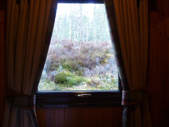 Macdonald Lochanhully Woodland Club: View from our bedroom
