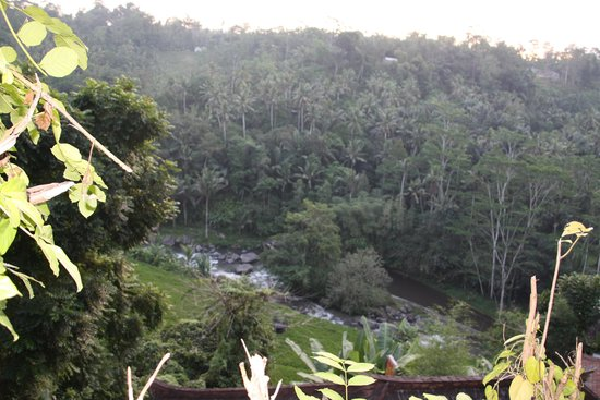 Kupu Kupu Barong Villas and Tree Spa: Amazing views
