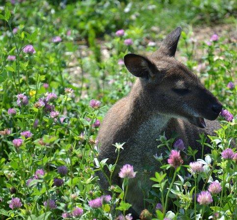 Le Vallon des Kangourous