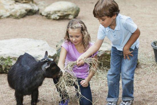 Landgasthof Zum Tierpark: Tierpark