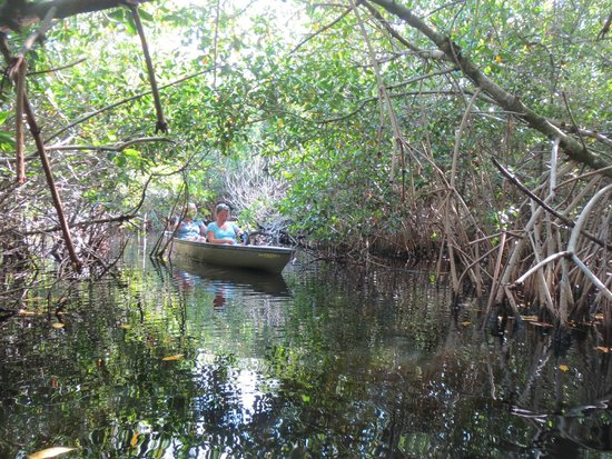 Everglades Area Tours: Into the mangrove tunnels