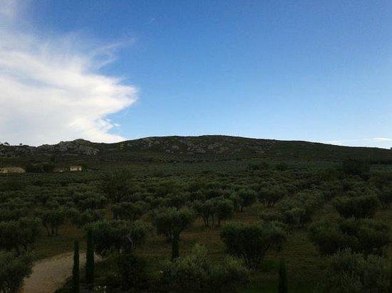 Le Temps des Olives: Uitzicht vanuit de kamer