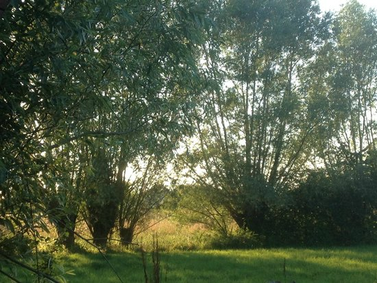 Camping De L'ile Verte : la nature environnante