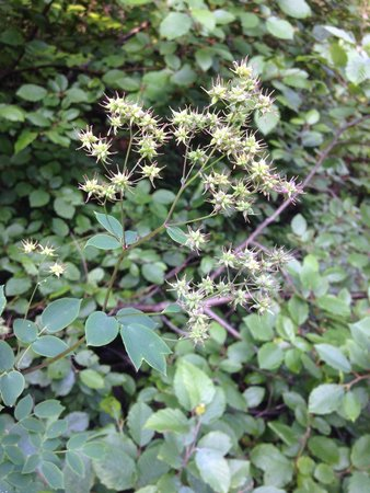 Judge C.R. Magney State Park: Some flowers along the path to the falls