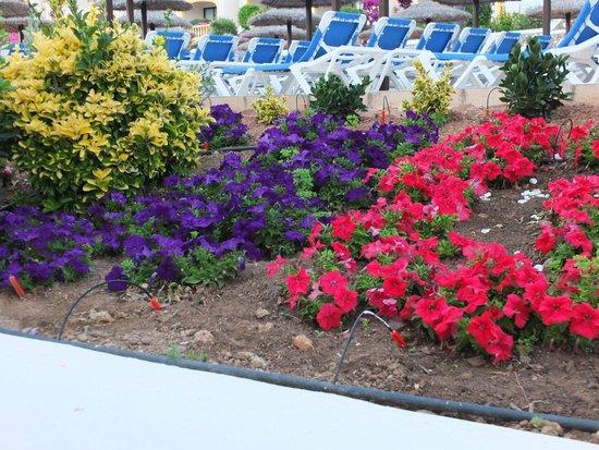Royal Son Bou Family Club: giardino molto curato
