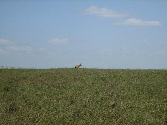Parc national de Nairobi : the scenery
