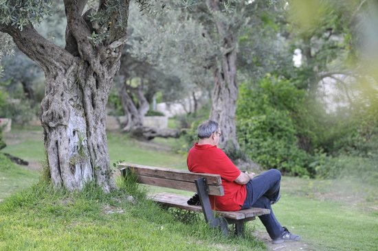 Mishkenot Sha'ananim: Some Quite by the old Olive tree