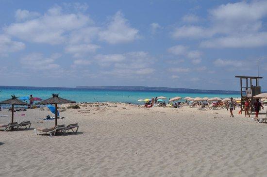 Flipper & Chiller : Beach front