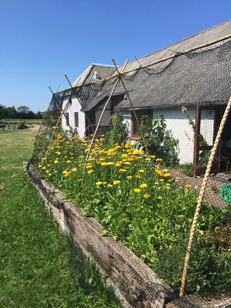 Laesoe Island, Dinamarca: The farmhouse & garden