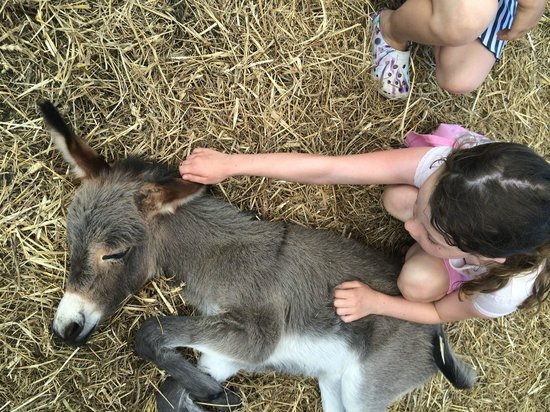 Storhaven: Baby donkey