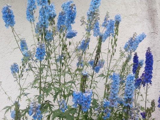 Hotel Aqua Bad Cortina: i fiori