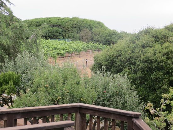 Point Reyes Vineyard Inn: View off the back deck