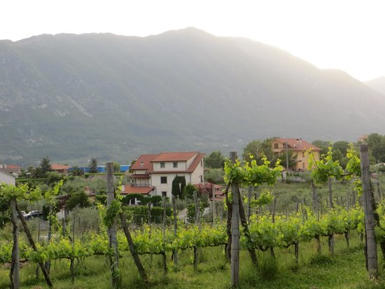 Italy Farm Stay: Countryside around the farm
