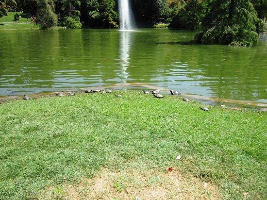Parque del Retiro: Turtles