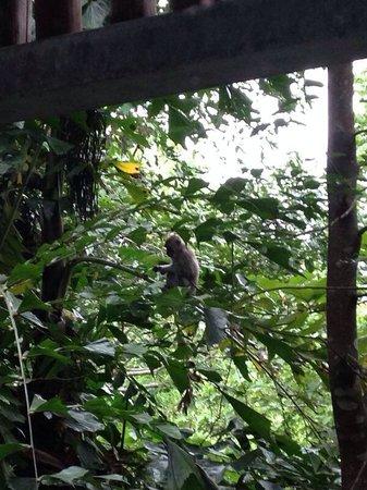 Belum Rainforest Resort : Uitzicht uit de kamer.