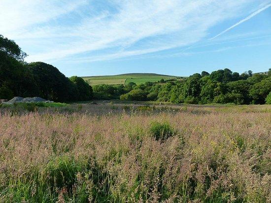 Gellifawr Woodland Retreat: views