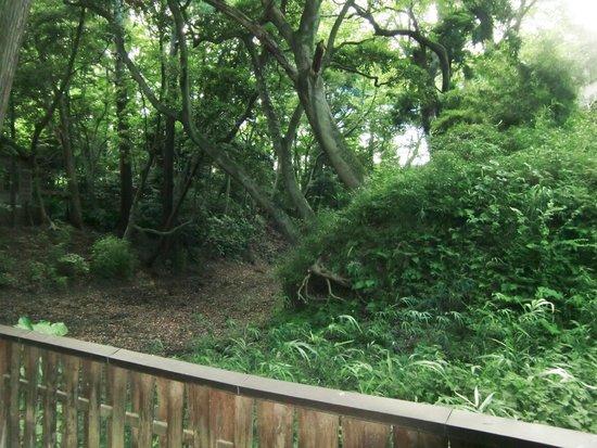 Odawara Castle: 大堀切